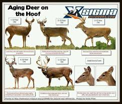Fawn Age Chart A Dixie Lady Deer Hunter Aging Deer Chart Hounds