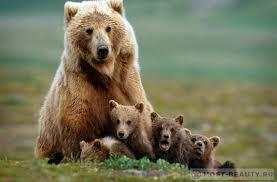 Картинки по запросу Медведь-символ Аляски