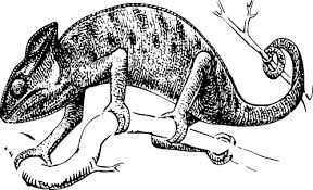 Image result for reptile clipart