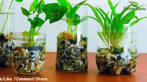 how to make indoor water garden from recycled materials indoor hydroponic gardening green plants
