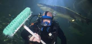awesome job shark tank cleaner