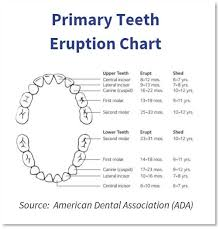 Permanent Teeth Eruption Chart What Every Parent Needs To Know About Baby Teeth