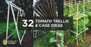 Diy tomato cage Tomato Trellis Morningchores 32 Diy Tomato Trellis Cage Ideas For Healthy Tomatoes