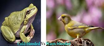 Difference Between Amphibians And Reptiles Venn Diagram Difference Between Cold Blooded And Warm Blooded Animals