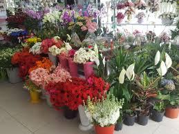 Bayrampaşa Çiçekçi Sipariş Hattı:0212 535 44 55