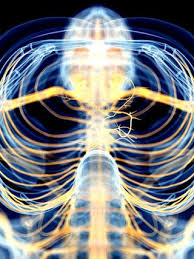 Reflexology Chart Vagus Nerve Vagus Nerve Stimulation Dramatically Reduces Inflammation