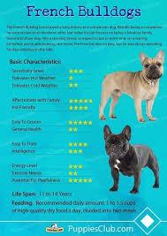 French Bulldog Height Chart Pin By Edward Jenny On Frenchies French Bulldog Breed