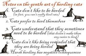 Image result for herding cats