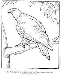 007 the bald eagle bald eagle drawings and coloring pages! on printable coloring picture of an eagle