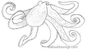 Small Picture Octopus Drawings In Pencil