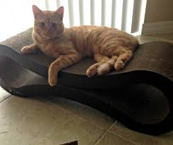 cat scratcher lounge. Jazzy The Rescue Cat On PetFusion Ultimate Scratcher Lounge R