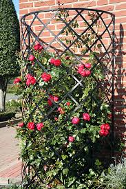 the exedra metall wall trellis is a