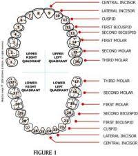 Orthodontic Charting Abbreviations Rechts Papierform Links