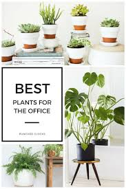 plants for office cubicle. Best Plants For The Office Cubicle