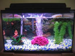Fun Fish Tank Decorations Begginer Fish Tank 10 Steps