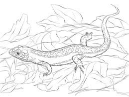 Small Picture Sand Lizard coloring page Free Printable Coloring Pages