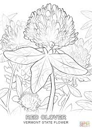 Small Picture Vermont State Flower coloring page Free Printable Coloring Pages