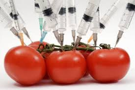 genetically modified food comparison images genetically modified food comparison