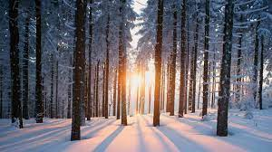 Winter Forest Wallpapers - Wallpaper Cave