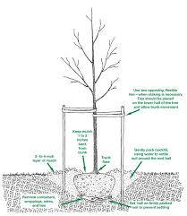 why we should plant more trees small footprint family essential tree planting tips