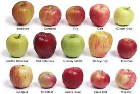 Apple Variety Chart All About Apples How To Cooking Tips Recipetips Com