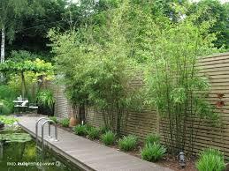 Bambus Im Garten Vielseitig Einsetzbar Als Hecke Sichtschutz Jpg Sichtschutz Garten Pflanzen