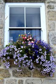 Our square box flower collection combines both elegance and beauty. The Best Trailing Plants For Window Boxes Bless My Weeds