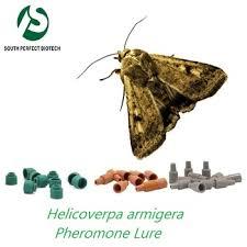 Corn Earworm Control Insect Pheromone Lure For Helicoverpa Armigera Insect Pheromone For Corn Earworm Bollworm Pests Control Buy Helicoverpa Armigera Pheromone