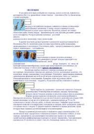 Эволюция реферат по биологии скачать бесплатно жизнь растение  Эволюция реферат по биологии скачать бесплатно жизнь растение животное иллюстрация фотография животные млекопитающие клетки энергии процесс