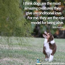 Quotes About Dogs Impressive Dog Quotes Gilda Radner Good Dog In A Box