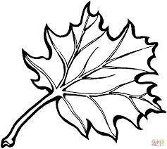 eastern black oak leaf coloring page free printable pages