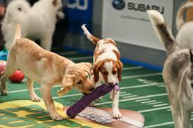 puppy bowl x halftime show. Plain Puppy The Best Of Puppy Bowl X To Halftime Show N
