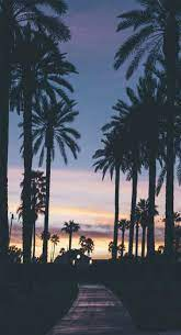 Palm Tree iPhone Wallpapers - Top Free ...