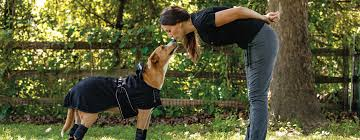 Back On Track Therapeutic Products For Dogs Horses People