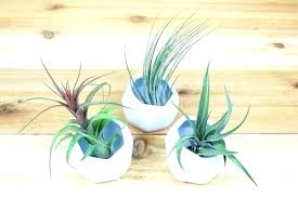 air plant containers holders for plants wall mounted pots target hanging pot holder