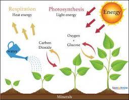 How Climatic Factors Affect Crop Production (Plant growth)