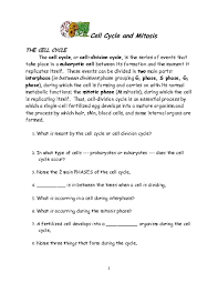 Cell Cycle And Mitosis Worksheet. Rupsucks Printables Worksheets