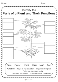 Copyright © 2016 lm 3. Parts Of Plant Worksheets Free Printable Science Plants And Their Functions Worksheet Free Printable Science Worksheets Plants Worksheet 4th Grade Multiplication Problems Math Tips Cool Ma6th Games Rubrics For Elementary Math Grade