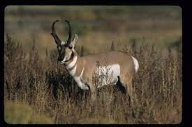 Image result for wintering wildlife on the Boise River Wildlife management Area