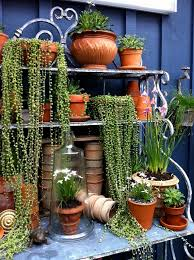 Small Picture 1803 best images on Pinterest Plants Home and Houseplants