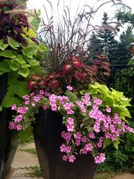 Small Picture Patio Flowers Full Sun Patio Flowers Pinterest Patios