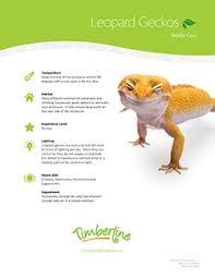 Leopard Gecko Size Chart Caring For Leopard Geckos Timberline