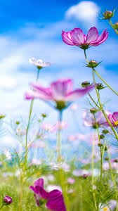 beautiful wallpapers of flowers for mobile. Beautiful Flowers In Full Bloom Smartphone Wallpapers And Of For Mobile