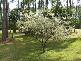 Fruit Trees That Grow In North Florida  Garden GuidesFruit Trees For North Florida