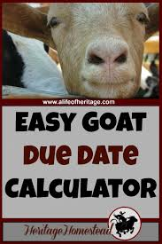 Imaginative Wrote Goat Farming Ideas Find Out Here