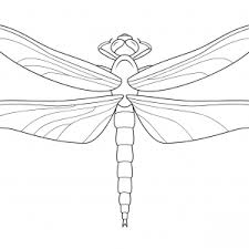 Small Picture Printable Dragonfly Coloring Pages Me Printable Pages adult