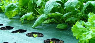 garden mats. Plain Mats With Garden Mats With A