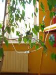 Как сделать из капельницы автополив для комнатных растений 106