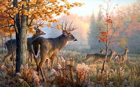 backgrounds hd deer hunting