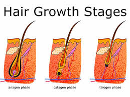 phases of hair growth cycle styles at